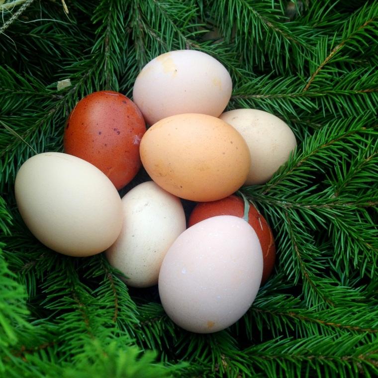ägg 1