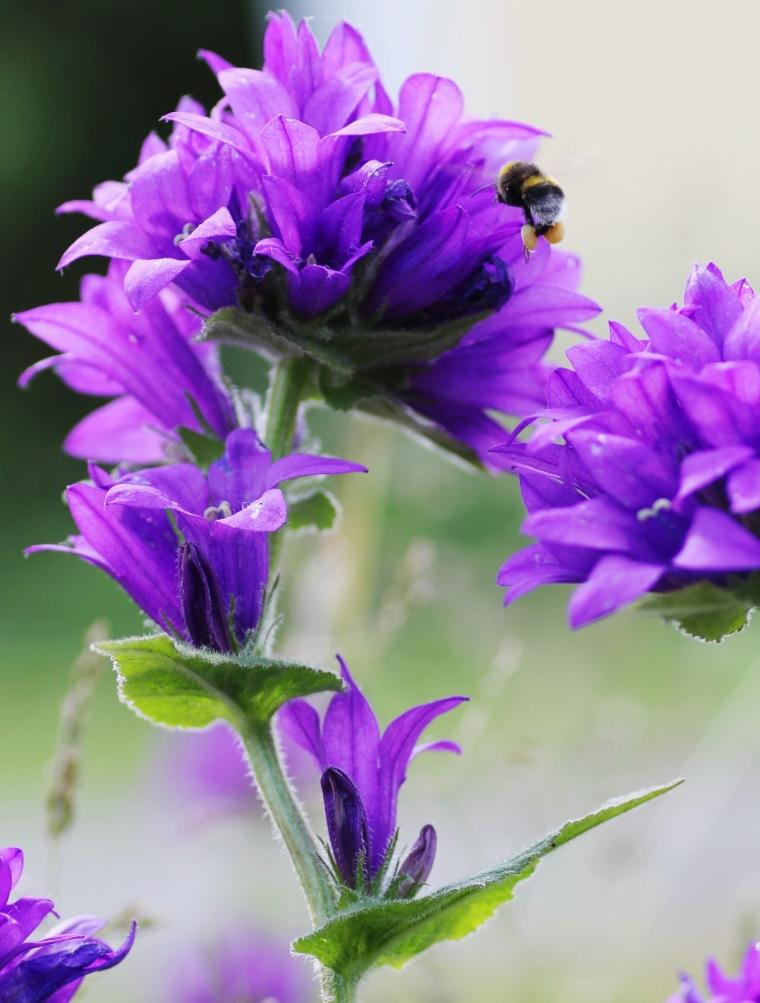 pollinering