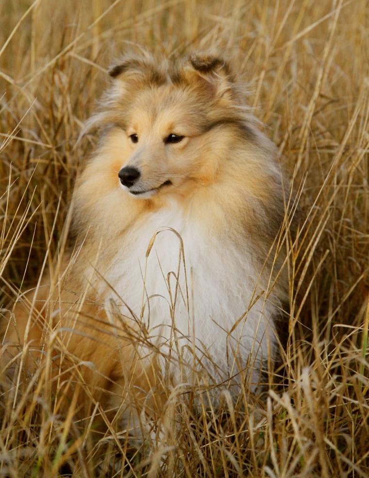 Shelly i det torra höstgräset