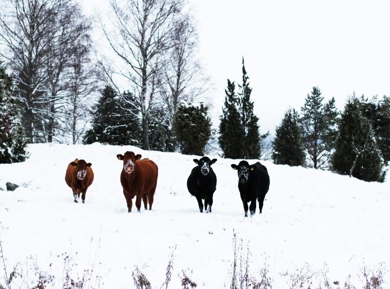kohage-vinter