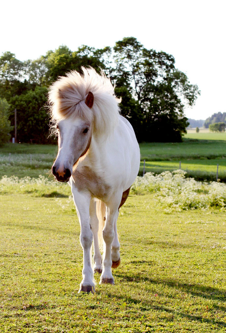 munkorg häst granngården